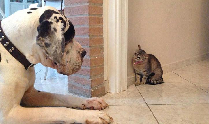 Il Dog Trainer Ci Parla Di Cani Che Convivono Con Altri Animali